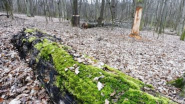 We completed the reconstruction of natural forest structure in the forests of Nagyoroszi and Diósjenő (DINPD)