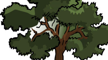What do we owe to the forests? – Infographics series on natural forest ecosystem services