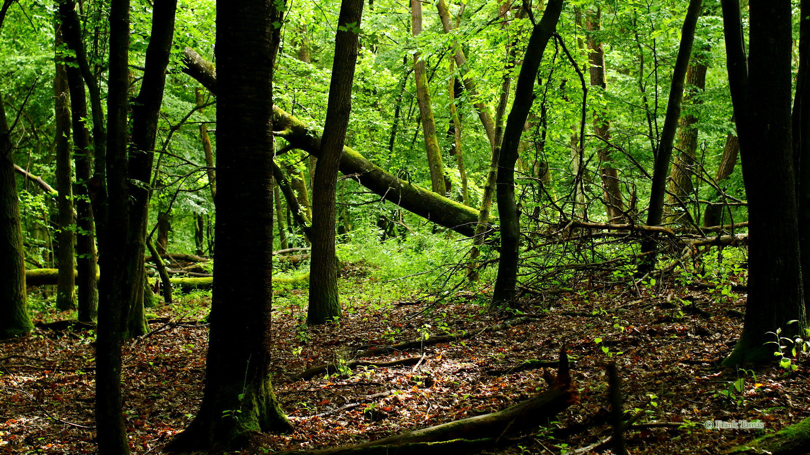 Visit in the natural oak forest of Kavicshát in Aggtelek